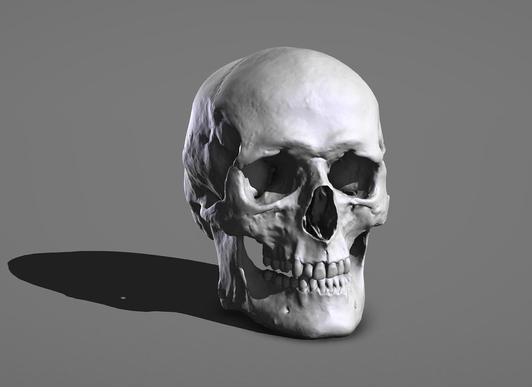 Rendu 3D crâne pour entrainement
